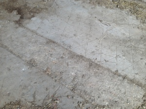Our concrete floor.  The herringbone bits are apparently from the original dairy at Manor Farm.