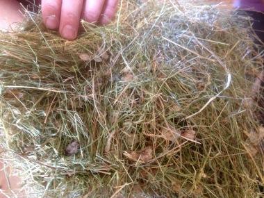 UK Apline Hay