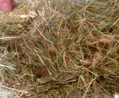UK Alpine Hay