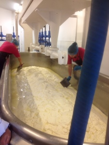 Beginnings of the process of transfering scoops of curd from the side of the vat to the centre. Beginnings of the draining process.